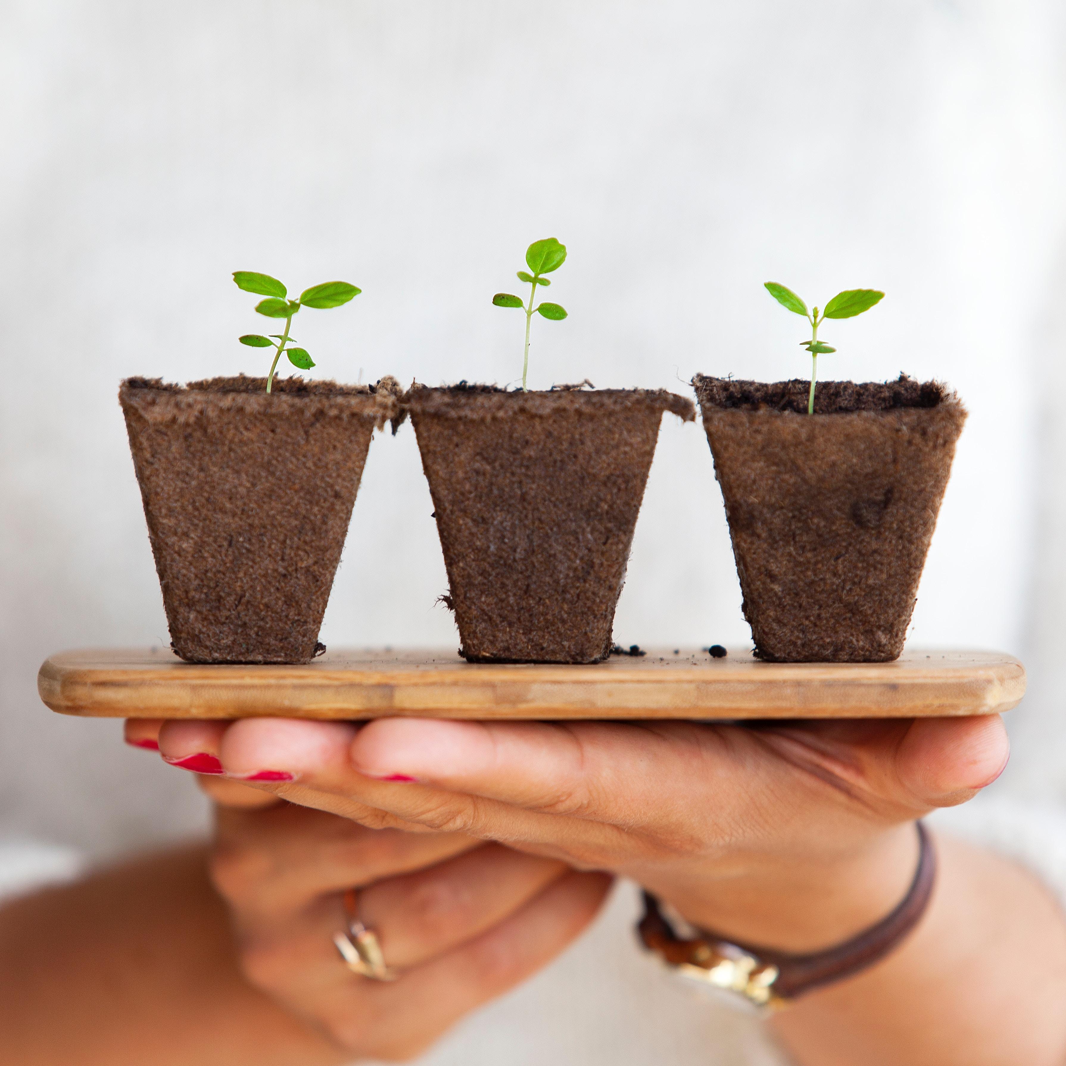 people management, HR, SME, Small Business, Growth, Nurture